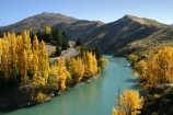 Autumn;central-otago;color;colour;fall;gold;golden;Kawarau-Gorge;Kawarau-River;New-Zealand;poplar;poplars;Queenstown-Road;river;rivers;season;seasonal;seasons;South-Island;tree;trees;valley;valleys;willow;willows;yellow