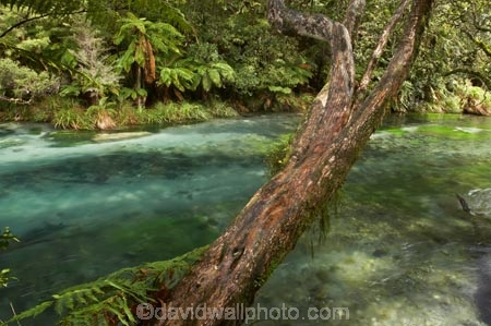 beautiful;beauty;bush;clean-water;clear-water;cyathea;Eastern-Bay-of-Plenty;endemic;fern;ferns;forest;forests;frond;fronds;green;Kawerau;Lake-Tarawera-Scenic-Reserve;N.I.;N.Z.;native;native-bush;natives;natural;nature;New-Zealand;NI;North-Is;North-Island;NZ;plant;plants;ponga;pongas;punga;pungas;river;rivers;scene;scenic;Tarawera-River;timber;tree;tree-fern;tree-ferns;tree-trunk;tree-trunks;trees;trunk;trunks;water;wood;woods