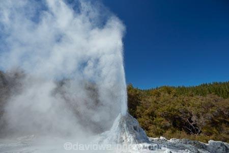 Bay-of-Plenty-Region;fountain;fountains;geothermal;geothermal-activity;geyser;geysers;hot;hot-water;lady-knox-geyser;N.I.;N.Z.;New-Zealand;NI;North-Is;North-Island;Nth-Is;NZ;pressure;Rotorua;steam;thermal;thermal-activity;thermal-area;volcanic;volcanic-activity;Wai_o_tapu;Wai_o_tapu-Reserve;Wai_o_tapu-Thermal-Reserve;Wai_o_tapu-Thermal-Wonderland;Waiotapu;Waiotapu-Reserve;Waiotapu-Thermal-Reserve;Waiotapu-Thermal-Wonderland;water