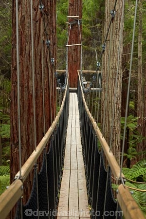 Bay-of-Plenty-Region;bridge;bridges;canopy-walk;eco_tourism;ecotourism;elevated-walkway;foot-bridge;foot-bridges;footbridge;footbridges;N.I.;N.Z.;New-Zealand;NI;North-Is;North-Island;Nth-Is;NZ;pedestrian-bridge;pedestrian-bridges;redwood;Redwood-Forest;redwood-tree;redwood-trees;redwoods;Redwoods-Forest;Redwoods-Treewalk;Rotorua;suspension-bridge;suspension-bridges;swing-bridge;swing-bridges;The-Redwoods;tourism;tree-trunk;tree-trunks;Treetop-walk;Treewalk;trunk;trunks;Whakarewarewa-Forest;wire-bridge;wire-bridges