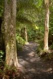 beautiful;beauty;bush;endemic;forest;forests;green;hike;hiking-track;hiking-tracks;Lake-Tarawera-Scenic-Reserve;N.I.;N.Z.;native;native-bush;natives;natural;nature;New-Zealand;NI;North-Is;North-Island;NZ;scene;scenic;timber;tramp;tramping;tramping-tack;tramping-tracks;tree;tree-trunk;tree-trunks;trees;trek;treking;trekking;trunk;trunks;walk;walking-track;walking-tracks;wood;woods