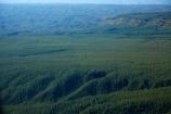 aerial;aerial-image;aerial-images;aerial-photo;aerial-photograph;aerial-photographs;aerial-photography;aerial-photos;aerial-view;aerial-views;aerials;Bay-of-Plenty-Region;conifer;conifer-forest;conifer-forests;conifers;exotic-forest;exotic-forestry;exotic-forests;forest;forestry;forests;N.I.;N.Z.;New-Zealand;NI;North-Is;North-Island;Nth-Is;NZ;pine-forest;pine-forests;pine-tree;pine-trees;plantation;plantations;Rotorua;timber;tree;trees;trunk;trunks;wood;woods