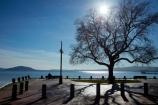 Bay-of-Plenty-Region;lake;Lake-Rotorua;lakes;N.I.;N.Z.;New-Zealand;NI;North-Is;North-Island;Nth-Is;NZ;park-bench;park-benches;Rotorua;shadow;shadows;silhouette;tree;trees