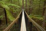 Bay-of-Plenty-Region;bridge;bridges;bush;canopy-walk;eco_tourism;ecotourism;elevated-walkway;fern;fern-frond;fern-fronds;ferns;foot-bridge;foot-bridges;footbridge;footbridges;forest;frond;fronds;N.I.;N.Z.;native-bush;native-forest;New-Zealand;NI;North-Is;North-Island;Nth-Is;NZ;pedestrian-bridge;pedestrian-bridges;ponga;pongas;punga;pungas;redwood;Redwood-Forest;redwood-tree;redwood-trees;redwoods;Redwoods-Forest;Redwoods-Treewalk;Rotorua;suspension-bridge;suspension-bridges;swing-bridge;swing-bridges;The-Redwoods;tourism;tree-fern;tree-ferns;Treetop-walk;treewalk;Whakarewarewa-Forest;wire-bridge;wire-bridges