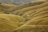 3022;back-country;backcountry;Central-Otago;golden;high-altitude;high-country;Highcountry;highlands;hill;hills;island;man;N.Z.;new;new-zealand;NZ;old;Old-Man-Range;range;remote;remoteness;rolling-hills;rolling-tussock-hills;S.I.;SI;south;South-Is;South-Island;Southland;Sth-Is;tussock;tussocks;upland;uplands;valley;Waikaia-Bush-Rd;Waikaia-Bush-Road;Waikaia-Bush-Track;zealand