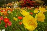 3798;bloom;blooms;botanic-garden;botanic-gardens;botanical-garden;botanical-gardens;color;colorful;colour;colourful;floral;flowers;garden;gardens;invercargill;invercargill-botanic-garden;island;N.Z.;new;new-zealand;NZ;orange;park;poppies;poppy;Queens-Park;Queens-Park-Gardens;Queens-Pk;queens;Queens-Park;Queens-Park-Gardens;Queens-Pk;rhododendron;S.I.;season;seasonal;seasons;SI;south;South-Is;South-Island;Southland;spring;spring-time;spring_time;springtime;Sth-Is.;yellow;zealand