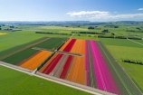 aerial;Aerial-drone;Aerial-drones;aerial-image;aerial-images;aerial-photo;aerial-photograph;aerial-photographs;aerial-photography;aerial-photos;aerial-view;aerial-views;aerials;agricultural;agriculture;bloom;blooming;blooms;color;colorful;colour;colourful;country;countryside;crop;crops;Drone;Drones;Edendale;farm;farming;farmland;farms;field;fields;floral;flower;flower-bed;flower-beds;flower-garden;flower-gardens;flowers;garden;gardens;growing;horticulture;meadow;meadows;N.Z.;New-Zealand;NZ;orange;orange-flowers;paddock;paddocks;pasture;pastures;pink;pink-flowers;Quadcopter-aerial;Quadcopters-aerials;red;red-flowers;rural;S.I.;season;seasonal;seasons;SI;South-Is;South-Island;Southland;spring;spring-time;spring_time;springtime;Triflor;tulip;tulips;U.A.V.-aerial;UAV-aerials;vibrant
