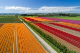 aerial;Aerial-drone;Aerial-drones;aerial-image;aerial-images;aerial-photo;aerial-photograph;aerial-photographs;aerial-photography;aerial-photos;aerial-view;aerial-views;aerials;agricultural;agriculture;bloom;blooming;blooms;color;colorful;colour;colourful;country;countryside;crop;crops;Drone;Drones;Edendale;farm;farming;farmland;farms;field;fields;floral;flower;flower-bed;flower-beds;flower-garden;flower-gardens;flowers;garden;gardens;geometric;growing;horticulture;line;lines;meadow;meadows;N.Z.;New-Zealand;NZ;orange;orange-flowers;paddock;paddocks;pasture;pastures;pattern;patterns;pink;pink-flowers;Quadcopter-aerial;Quadcopters-aerials;red;red-flowers;row;rows;rural;S.I.;season;seasonal;seasons;SI;South-Is;South-Island;Southland;spring;spring-time;spring_time;springtime;Triflor;tulip;tulips;U.A.V.-aerial;UAV-aerials;vibrant