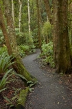 bush;fern;ferns;forest;forests;green;hiking-path;hiking-paths;hiking-trail;hiking-trails;Invercargill;Invercargill-Park;Invercargill-Parks;lush;N.Z.;native;native-bush;native-forest;native-forests;native-tree;native-trees;native-woods;natural;nature;New-Zealand;NZ;park;parks;path;paths;pathway;pathways;remnant-forest;route;routes;S.I.;Seaward-Bush;Seaward-Bush-Reserve;SI;South-Is;South-Island;Southland;Sth-Is;track;tracks;trail;trails;tree;tree-trunk;tree-trunks;trees;walking-path;walking-paths;walking-track;walking-trail;walking-trails;walkway;walkways;wood;woods