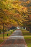 autuminal;autumn;autumn-colour;autumn-colours;autumnal;avenue;avenues;color;colors;colour;colours;deciduous;fall;gold;golden;Invercargill;leaf;leaves;municipal;N.Z.;New-Zealand;NZ;park;parks;Queens-Park;Queens-Pk;Queens-Park;Queens-Pk;S.I.;season;seasonal;seasons;SI;South-Is;South-Island;Southland;Sth-Is;tree;trees;yellow