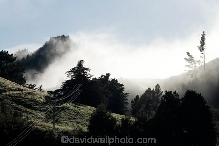 agricultural;agriculture;country;countryside;Early-Morning-Mist;exotic-forest;exotic-forestry;exotic-forests;farm;farming;farmland;farms;field;fields;fog;foggy;fogs;forest;forestry;forests;meadow;meadows;mist;mists;misty;monochromatic;N.I.;N.Z.;New-Zealand;NI;North-Island;NZ;paddock;paddocks;pasture;pastures;pine-tree;pine-trees;rural;timber;tree;trees;trunk;trunks;Wanganui;Wanganui-Region;wood;woods