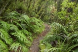 beautiful;beauty;bush;damp;Dawson-Falls;Egmont-N.P.;Egmont-National-Park;Egmont-NP;endemic;fern;ferns;footpath;footpaths;forest;forests;frond;fronds;green;lichen;lichens;lush;moss;mosses;Mount-Egmont;Mount-Taranaki;Mount-Taranaki-Egmont;Mt-Egmont;Mt-Taranaki;Mt-Taranaki-Egmont;Mt.-Egmont;Mt.-Taranaki;Mt.-Taranaki-Egmont;N.I.;N.Z.;native;native-bush;natives;natural;nature;New-Zealand;NI;North-Is;North-Is.;North-Island;NZ;rain-forest;rain-forests;rain_forest;rain_forests;rainforest;rainforests;scene;scenic;Taranaki;timber;track;tracks;tree;tree-trunk;tree-trunks;trees;trunk;trunks;verdant;Walking-Track;walking-tracks;wood;woods