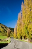 agricultural;agriculture;autuminal;autumn;autumn-colour;autumn-colours;autumnal;color;colors;colour;colours;country;countryside;deciduous;driving;fall;farm;farming;farmland;farms;field;fields;highway;highways;leaf;leaves;meadow;meadows;N.I.;N.Z.;New-Zealand;NI;North-Island;NZ;open-road;open-roads;paddock;paddocks;pasture;pastures;poplar;poplar-tree;poplar-trees;poplars;road;road-trip;roads;rural;season;seasonal;seasons;State-Highway-4;State-highway-Four;transport;transportation;travel;traveling;travelling;tree;trees;trip;Wanganui;Wanganui-_-Raetihi-Road;Wanganui-Region