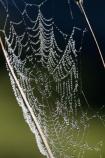 close_up;Dew;dew-;dew-s;moisture;N.I.;N.Z.;nature;New-Zealand;NI;North-Island;NZ;spider-web;spider-webs;Wanganui;Wanganui-Region;web;webs