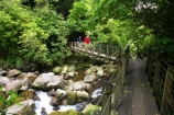 beautiful;beauty;bridge;bridges;brook;brooks;bush;cascade;cascades;creek;creeks;doc;endemic;fern;ferns;foot-bridge;foot-bridges;footbridge;footbridges;forest;forests;green;hike;hiker;hikers;hiking;hiking-track;hiking-tracks;Kaimai-Ranges;lush;Matamata;moss;native;native-bush;native-forest;natives;natural;nature;New-Zealand;north-is.;north-island;northland;pedestrian-bridge;pedestrian-bridges;ponga;punga;rain-forest;rain-forests;rain_forest;rain_forests;rainforest;rainforests;rapid;rapids;river;rivers;scene;scenic;stream;streams;swing-bridge;swing-bridges;timber;tracks;tramp;tramper;trampers;tramping;tree;tree-fern;tree-ferns;tree-trunk;tree-trunks;trees;trek;treker;trekers;treking;trekker;trekkers;trekking;trunk;trunks;verdant;Waikato;Wairere-Falls;Wairere-Falls-Scenic-Reserve;wairere-stream;walk;walker;walkers;walking;walking-track;walking-tracks;wire-bridge;wire-bridges;wood;woods
