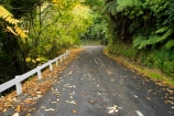 Autumn-Colour;bend;bends;centre-line;centre-lines;centre_line;centre_lines;centreline;centrelines;corner;corners;driving;King-Country;Mokauiti;N.I.;N.Z.;New-Zealand;NI;North-Island;NZ;open-road;open-roads;Ramaroa-Road;road;road-trip;roads;transport;transportation;travel;traveling;travelling;trip