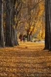 autuminal;autumn;autumn-colour;autumn-colours;autumn-leaves;autumnal;avenue;avenues;Central-Otago;color;colors;colour;colours;deciduous;fall;golden;jog;jogger;joggers;joggin;Lake-Wanaka;leaf;leaves;N.Z.;New-Zealand;NZ;Otago;poplar;poplar-tree;poplar-trees;poplars;run;runner;runners;running;S.I.;season;seasonal;seasons;SI;South-Island;Southern-Lakes;Southern-Lakes-District;Southern-Lakes-Region;tree;trees;trunk;trunks;Wanaka;yellow