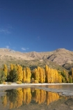autuminal;autumn;autumn-colour;autumn-colours;autumnal;calm;Central-Otago;color;colors;colour;colours;deciduous;fall;golden;lake;Lake-Wanaka;lakes;leaf;leaves;Mount-Alpha;Mt-Alpha;Mt.-Alpha;N.Z.;New-Zealand;NZ;Otago;placid;poplar;poplar-tree;poplar-trees;poplars;quiet;reflection;reflections;S.I.;season;seasonal;seasons;serene;SI;smooth;South-Is.;South-Island;Southern-Lakes;Southern-Lakes-District;Southern-Lakes-Region;still;tranquil;tree;trees;Wanaka;water;yellow