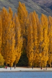 autuminal;autumn;autumn-colour;autumn-colours;autumnal;Central-Otago;color;colors;colour;colours;deciduous;fall;gold;golden;lake;Lake-Wanaka;lakes;leaf;leaves;N.Z.;New-Zealand;NZ;Otago;people;person;photographer;photographers;poplar;poplar-tree;poplar-trees;poplars;S.I.;season;seasonal;seasons;SI;South-Is.;South-Island;Southern-Lakes;Southern-Lakes-District;Southern-Lakes-Region;Sth-Is;still;tourism;tourist;tourists;tree;trees;Wanaka;water;yellow