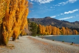 autuminal;autumn;autumn-colour;autumn-colours;autumnal;Central-Otago;color;colors;colour;colours;deciduous;fall;gold;golden;lake;Lake-Wanaka;lakes;leaf;leaves;Mount-Alpha;Mt-Alpha;Mt.-Alpha;N.Z.;New-Zealand;NZ;Otago;poplar;poplar-tree;poplar-trees;poplars;S.I.;season;seasonal;seasons;SI;South-Is.;South-Island;Southern-Lakes;Southern-Lakes-District;Southern-Lakes-Region;Sth-Is;tree;trees;Wanaka;water;yellow