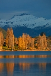 autuminal;autumn;autumn-colour;autumn-colours;autumnal;Buchanan-Mountains;Buchanan-Peaks;calm;Central-Otago;cloud;clouds;cloudy;color;colors;colour;colours;deciduous;fall;gold;golden;lake;Lake-Wanaka;lakes;leaf;leaves;Mount-Aspiring-N.P.;Mount-Aspiring-National-Park;Mount-Aspiring-NP;Mount-Avalanche;mountain;mountains;Mt-Aspiring-N.P.;Mt-Aspiring-National-Park;Mt-Aspiring-NP;Mt-Avalanche;N.Z.;New-Zealand;NZ;Otago;overcast;placid;poplar;poplar-tree;poplar-trees;poplars;quiet;reflected;reflection;reflections;season;seasonal;seasons;serene;SI;sky;smooth;snow;snow-capped;snowy;South-Island;Sth-Is;still;tranquil;tree;trees;Wanaka;water;yellow