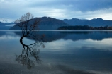 calm;Central-Otago;cloud;clouds;cloudy;lake;Lake-Wanaka;lakes;N.Z.;New-Zealand;NZ;Otago;placid;quiet;reflected;reflection;reflections;serene;SI;smooth;South-Island;Sth-Is;still;that-tree;that-wanaka-tree;thattree;thatwanakatree;tranquil;tree;tree-in-lake;trees;Wanaka;Wanaka-Tree;water;willow;willow-tree;willow-trees;willows