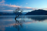 calm;Central-Otago;lake;Lake-Wanaka;lakes;N.Z.;New-Zealand;NZ;Otago;placid;quiet;reflected;reflection;reflections;serene;SI;smooth;South-Island;Sth-Is;still;that-tree;that-wanaka-tree;thattree;thatwanakatree;tranquil;tree;tree-in-lake;trees;Wanaka;Wanaka-Tree;water;willow;willow-tree;willow-trees;willows