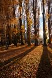 autuminal;autumn;autumn-colour;autumn-colours;autumn-leaves;autumnal;avenue;avenues;Central-Otago;color;colors;colour;colours;deciduous;fall;gold;golden;Lake-Wanaka;leaf;leaves;N.Z.;New-Zealand;NZ;Otago;poplar;poplar-tree;poplar-trees;poplars;S.I.;season;seasonal;seasons;shadow;shadows;SI;South-Island;Southern-Lakes;Southern-Lakes-District;Southern-Lakes-Region;Sth-Is;tree;trees;trunk;trunks;Wanaka;yellow