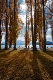 autuminal;autumn;autumn-colour;autumn-colours;autumn-leaves;autumnal;avenue;avenues;Central-Otago;color;colors;colour;colours;deciduous;fall;gold;golden;lake;Lake-Wanaka;lakes;leaf;leaves;N.Z.;New-Zealand;NZ;Otago;poplar;poplar-tree;poplar-trees;poplars;S.I.;season;seasonal;seasons;shadow;shadows;SI;South-Island;Southern-Lakes;Southern-Lakes-District;Southern-Lakes-Region;Sth-Is;tree;trees;trunk;trunks;Wanaka;yellow;model-released;model-release