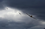 1939;1940;1941;1942;1943;1944;1945;aeroplane;aeroplanes;air-craft;air-display;air-displays;air-force;air-show;air-shows;aircraft;airforce;airplane;airplanes;airshow;airshows;aviating;aviation;aviator;aviators;battle-of-britain;Bf-108;Bf108;combat;demonstration;display;displays;fighter;fighter-bomber;fighter-bombers;fighter-plane;fighter-planes;fighters;flight;flights;fly;flyer;flyers;flying;german;germany;hawker-hurricane;hawker-hurricanes;historic;historical;hurricane;hurricanes;luftwaffe;mark-16;Me-108;Me-108s;Messerschmitt;Messerschmitt-Me108;Messerschmitt-Me108s;Messerschmitts;military;monoplane;monoplanes;new-zealand;nz;Old;pilot;pilots;plane;planes;propellor;RAAF;RAF;RNZAF;sky;south-island;spitfire;spitfires;squadron;supermarine;supermarine-Mk-XVI-spitfire;taifun;trainer;vintage;wanaka;war;warbird;warbirds;warbirds-over-wanaka;wars;world-war-2;World-War-II;world-war-two;ww2;WWII