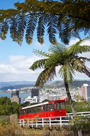 cable-car;cable-cars;cable-way;cable-ways;cable_car;cable_cars;cable_way;cable_ways;cablecar;cablecars;cableway;cableways;capital;capitals;cyathea;fern;ferns;frond;fronds;historic;historical;history;Kelburn;N.I.;N.Z.;New-Zealand;NI;North-Is;North-Island;NZ;plant;plants;ponga;pongas;public-transport;public-transportation;punga;pungas;rail;rails;tourism;tourist;tourist-attraction;tourist-attractions;tourist-ride;tourist-rides;tram;tram-car;tram-cars;tram_car;tram_cars;tram_way;tram_ways;tramcar;tramcars;trams;tramway;tramways;transport;tree-fern;tree-ferns;Welington-Cable-Car;Welington-Cable_Car;Wellington
