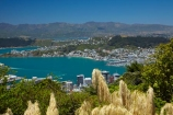 Austroderia;C.B.D.;CBD;Central-Business-District;coast;coastal;downtown;grass;grasses;harbor;harbors;harbour;harbours;N.I.;N.Z.;New-Zealand;NI;North-Is.;North-Island;Nth-Is;NZ;Oriental-Bay;Oriental-Parade;Oriental-Pde;Port-Nicholson;Te-Ahumairangi-Hill;Te-Whanganui_a_Tara;Tinakori-Hill;toetoe;toitoi;Wellington;Wellington-Harbor;Wellington-Harbour;Wellington-Waterfront