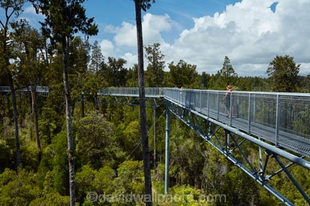 aerial-walkway;aerial-walkways;aerials-walkways;bridge;bridges;bush;canopy;canopy-walk;eco-tourism;ecotourism;elevated-walkway;elevated-walkways;engineering;forest;forest-canopy;forests;high;high-up;Hokitika;lush;luxuriant;M.R.;model-release;model-released;MR;N.Z.;native-bush;native-forest;native-forests;native-tree;native-trees;native-woods;natural;nature;New-Zealand;NZ;plant;plants;rain-forest;rain-forests;rain_forests;rainforest;rainforest-canopy;rainforest-walk;rainforests;S.I.;SI;South-Is;South-Island;steel;Sth-Is;structure;structures;tourism;travel;tree;Tree-top-Walk;Tree-top-Walkway;tree-trunk;tree-trunks;Tree_top-Walk;Tree_top-Walkway;trees;Treetop-Walk;Treetop-Walkway;walkway;walkways;West-Coast;West-Coast-Treetop-Walk;West-Coast-Treetop-Walkway;Westland;wood;woods