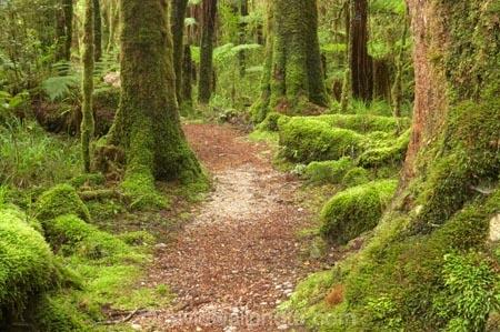 beautiful;beauty;bush;endemic;fern;ferns;forest;forests;green;Kahurangi-National-Park;Karamea;lush;Moira-Gate-Arch;moss;mosses;mossy;national-park;national-parks;native;native-bush;natives;natural;nature;New-Zealand;Nothofagus;Oparara-Basin;ponga;pongas;punga;pungas;rain-forest;rain-forests;rain_forest;rain_forests;rainforest;rainforests;scene;scenic;South-Island;southern-beeches;timber;track;tracks;tree;tree-fern;tree-ferns;tree-trunk;tree-trunks;trees;trunk;trunks;verdant;walking-track;walking-tracks;West-Coast;Westland;wood;woods