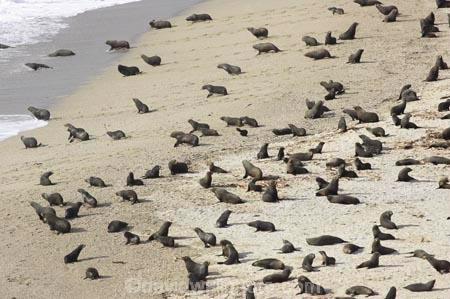 aerial;aerial-photo;aerial-photography;aerial-photos;aerial-view;aerial-views;aerials;Arctocephalus-forsteri;Arnott-Point;Arnott-Point-Seal-Colony;beach;beaches;coast;coastal;coastline;coastlines;coasts;Fur-Seal;Fur-Seals;heritage-area;Knights-Point;Knights-Point;N.Z.;New-Zealand;New-Zealand-Fur-Seal;New-Zealand-Fur-Seals;NZ;ocean;oceans;S.I.;sand;sandy;sea;seal;seals;seas;shore;shoreline;shorelines;shores;SI;South-Island;surf;te-wahi-pounamu;te-wahipounamu;te-wahipounamu-south_west-new-zealand-world-heritage-area;wave;waves;West-Coast;Westland;world-heirtage-site;world-heirtage-sites;world-heritage-area;world-heritage-areas