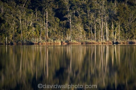 beautiful;beauty;bush;calm;endemic;forest;forests;green;lake;Lake-Mahinapua;lakes;N.Z.;native;native-bush;natives;natural;nature;New-Zealand;NZ;placid;quiet;rain-forest;rain-forests;rain_forest;rain_forests;rainforest;rainforests;reflection;reflections;S.I.;scene;scenic;serene;SI;smooth;South-Is.;South-Island;still;tranquil;tree;trees;water;Wesl-Coast;Westland;wood;woods