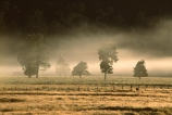 agriculture;farm;farming;farms;field;fields;fog;meadow;meadows;mist;paddock;paddocks;pasture;pastures;rural;tree;trees