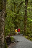 Beech-Forest;Blue-Pools;Blue-Pools-Track;Blue-Pools-Walk;bush;fern;ferns;forest;forests;green;Haast-Pass;lush;Makarora;model-release;model-released;moss;mosses;Mount-Aspiring-National-Park;MR;Mt-Aspiring-N.P.;Mt-Aspiring-National-Park;Mt-Aspiring-NP;N.Z.;national-park;national-parks;native-bush;native-forest;native-forests;native-tree;native-trees;native-woods;natural;nature;New-Zealand;NZ;people;person;S.I.;SI;South-Is;South-Island;Sth-Is;tourism;tourist;tourists;travel;tree;tree-trunks;trees;verdant;West-Coast;Westland;wood;woods