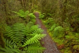 Beech-Forest;bush;fern;ferns;forest;forests;green;Haast-Pass;hiking-path;hiking-paths;hiking-trail;hiking-trails;lush;Mount-Aspiring-National-Park;Mt-Aspiring-N.P.;Mt-Aspiring-National-Park;Mt-Aspiring-NP;N.Z.;national-park;national-parks;native-bush;native-forest;native-forests;native-tree;native-trees;native-woods;natural;nature;New-Zealand;NZ;path;paths;pathway;pathways;Pleasant-Flat;Pleasant-Flat-Bush-Walk;Pleasant-Flat-track;S.I.;SI;South-Is;South-Island;Sth-Is;track;tracks;trail;trails;tramping-trail;tramping-trails;tree;trees;verdant;walking-path;walking-paths;walking-trail;walking-trails;walkway;walkways;West-Coast;Westland;wood;woods