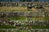 farm-gate;farm-gates;Fox-Glacier;gate;gates;gateway;gateways;lichen;lichen_covered;lichens;loss;N.Z.;New-Zealand;NZ;S.I.;SI;South-Is;South-Island;Sth-Is;West-Coast;Westland