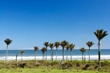 beach;coast;coastal;New-Zealand;Nikau;nikau-palm;Nikau-Palms;palm;palm-tree;palm-trees;palms;South-Island;tree;trees;west-coast;westland
