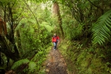 beautiful;beauty;bush;endemic;fern;ferns;forest;forests;green;hike;hiker;hikers;hiking;Kahurangi-National-Park;Karamea;lush;native;native-bush;natives;natural;nature;New-Zealand;Nothofagus;Oparara-Arch;Oparara-Basin;people;person;ponga;pongas;punga;pungas;rain-forest;rain-forests;rain_forest;rain_forests;rainforest;rainforests;scene;scenic;South-Island;southern-beeches;timber;Track;tracks;tree;tree-fern;tree-ferns;tree-trunk;tree-trunks;trees;trunk;trunks;verdant;walker;walkers;walking;walking-track;walking-tracks;West-Coast;Westland;wood;woods