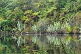Blue-River;calm;calm-River;flax;flaxes;lake;Lake-Moeraki;lakes;Moeraki-River;n.z.;native;native-bush;natural;natural-scenery;nature;new-zealand;nz;phormium;phormium-sp;placid;quiet;reflection;reflections;river;rivers;S.I.;scene;serene;SI;smooth;South-Island;still;tranquil;water;west-coast;westland