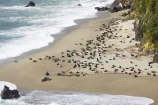 aerial;aerial-photo;aerial-photography;aerial-photos;aerial-view;aerial-views;aerials;Arctocephalus-forsteri;Arnott-Point;Arnott-Point-Seal-Colony;beach;beaches;coast;coastal;coastline;coastlines;coasts;Fur-Seal;Fur-Seals;heritage-area;Knights-Point;Knights-Point;N.Z.;New-Zealand;New-Zealand-Fur-Seal;New-Zealand-Fur-Seals;NZ;ocean;oceans;S.I.;sand;sandy;sea;seal;seals;seas;shore;shoreline;shorelines;shores;SI;South-Island;surf;te-wahi-pounamu;te-wahipounamu;te-wahipounamu-south_west-new-zealand-world-heritage-area;wave;waves;West-Coast;Westland;world-heirtage-site;world-heirtage-sites;world-heritage-area;world-heritage-areas