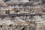 AB;Alberta;bad-land;bad-lands;bad_land;bad_lands;badland;badlands;barren;beige;brown;Canada;Canadian;Canadian-Badlands;canyon;canyons;clay;desert;desolate;dirt;Drumheller;dry;eroded;erosion;formation;formations;geological-formation;geological-formations;geology;gorge;gorges;Horse-Shoe-Canyon;Horseshoe-Canyon;layer;layering;layers;natural;natural-landscape;natural-landscapes;North-America;ravine;ravines;Red-Deer-River-Valley;sedimentary-layer;sedimentary-layers;unusual-natural-feature;unusual-natural-features;Western-Canada