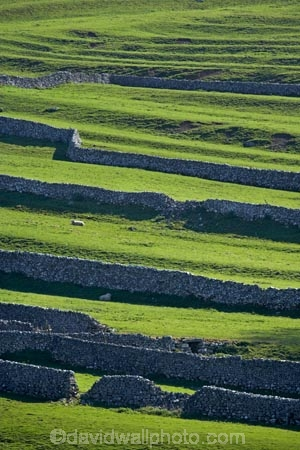 agricultural;agriculture;Britain;British-Isles;country;countryside;dry-stone-wall;dry-stone-walls;dry_stone-wall;dry_stone-walls;drystone-wall;drystone-walls;England;English-countryside;Europe;farm;farming;farmland;farms;fence;fence-line;fence-lines;fence_line;fence_lines;fenceline;fencelines;fences;field;fields;G.B.;GB;grass;Great-Britain;green;heritage;historic;livestock;Malham;meadow;meadows;North-Yorkshire;Northern-England;paddock;paddocks;pasture;pastures;rock-wall;rock-walls;rural;sheep;stock;stone-fence;stone-fences;stone-wall;stone-walling;stone-wallings;stone-walls;tradition;traditional;U.K.;UK;United-Kingdom;Yorkshire;Yorkshire-countryside;Yorkshire-Dales;Yorkshire-Dales-National-Park;Yorkshire-Farm;Yorkshire-Farmland;Yorkshire-Farmlands;Yorkshire-Farms