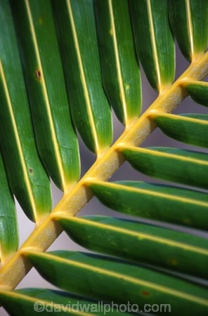Close-up;Close_up;Color;Colour;Detail;Details;Green;Horizontal;Vertical;Leaf;Leaves;Nature;natural;Palm;Palm-tree;Palm-trees;Palms;Plant;Plants;Texture;Textures;angle;angles;stalk;stem