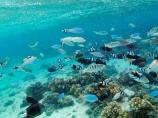 aqua;aquamarine;blue;clean-water;clear-water;coast;coastal;coasts;cobalt-blue;cobalt-ultramarine;cobaltultramarine;coral-reef;coral-reefs;diving;Fij;Fiji;Fiji-Islands;fish;fishes;island;islands;Malolo-Lailai-Is;Malolo-Lailai-Island;Malololailai-Is;Malololailai-Island;Mamanuca-Group;Mamanuca-Is;Mamanuca-Island-Group;Mamanuca-Islands;Mamanucas;marine;marine-environment;marine-life;marinelife;ocean;oceanlife;Pacific;Pacific-Island;Pacific-Islands;Plantation-Is;Plantation-Is-Resort;Plantation-Island;Plantation-Island-Resort;reef;reefs;sea;sealife;snorkelling;South-Pacific;teal-blue;tropical-fish;tropical-island;tropical-islands;tropical-reef;tropical-reefs;turquoise;under-water;under_water;undersea;underwater;underwater-photo;underwater-photography;underwater-photos;water