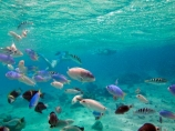 aqua;aquamarine;blue;clean-water;clear-water;coast;coastal;coasts;cobalt-blue;cobalt-ultramarine;cobaltultramarine;coral-reef;coral-reefs;diving;Fij;Fiji;Fiji-Islands;fish;fishes;Halichoeres-trimaculatus;island;islands;Malolo-Lailai-Is;Malolo-Lailai-Island;Malololailai-Is;Malololailai-Island;Mamanuca-Group;Mamanuca-Is;Mamanuca-Island-Group;Mamanuca-Islands;Mamanucas;marine;marine-environment;marine-life;marinelife;ocean;oceanlife;Pacific;Pacific-Island;Pacific-Islands;Plantation-Is;Plantation-Is-Resort;Plantation-Island;Plantation-Island-Resort;reef;reefs;sea;sealife;snorkelling;South-Pacific;teal-blue;Three-spot-wrasse;Threespot-wrasse;tropical-fish;tropical-island;tropical-islands;tropical-reef;tropical-reefs;turquoise;under-water;under_water;undersea;underwater;underwater-photo;underwater-photography;underwater-photos;water