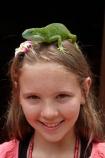 Brachylophus-fasciatus;child;children;Coral-Coast;Fij;Fiji-banded-iguana;Fiji-banded-iguanas;Fiji-iguana;Fiji-iguanas;Fiji-Islands;girl;girls;green-lizard;iguana;iguanas;Iguanidae;kid;kids;Korotogo;Kula-Eco-Park;Kula-Ecopark;lizard;lizards;Pacific;reptile;reptiles;saumuri;Sigatoka;South-Pacific;tourist-attraction;tourist-attractions;Viti-Levu;Viti-Levu-Island;vokai